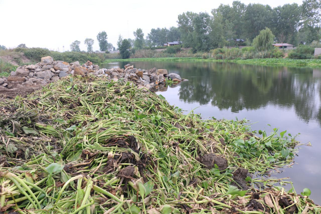 اجرای فاز عملیاتی جمع آوری سنبل آبی در رودخانه چمخاله