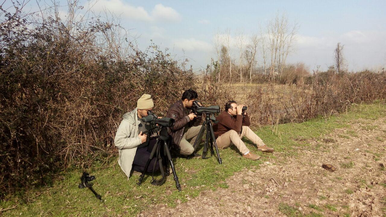سرشماری زمستانه پرندگان در زیستگاههای لاهیجان با مشارکت سازمانهای مردم نهاد