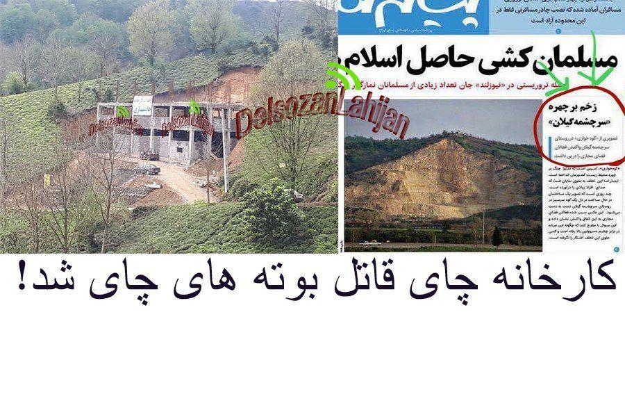 💢کارخانه چای در دل کوه های لاهیجان باعث مرگ بوته های چای شد  #صدای_شهروند