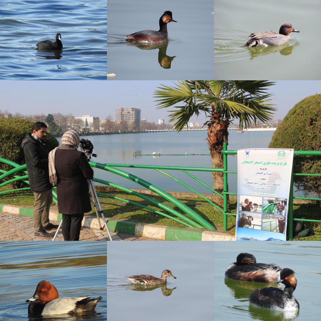 طرح پرنده نگری در استخر لاهیجان با استقبال همراه شد