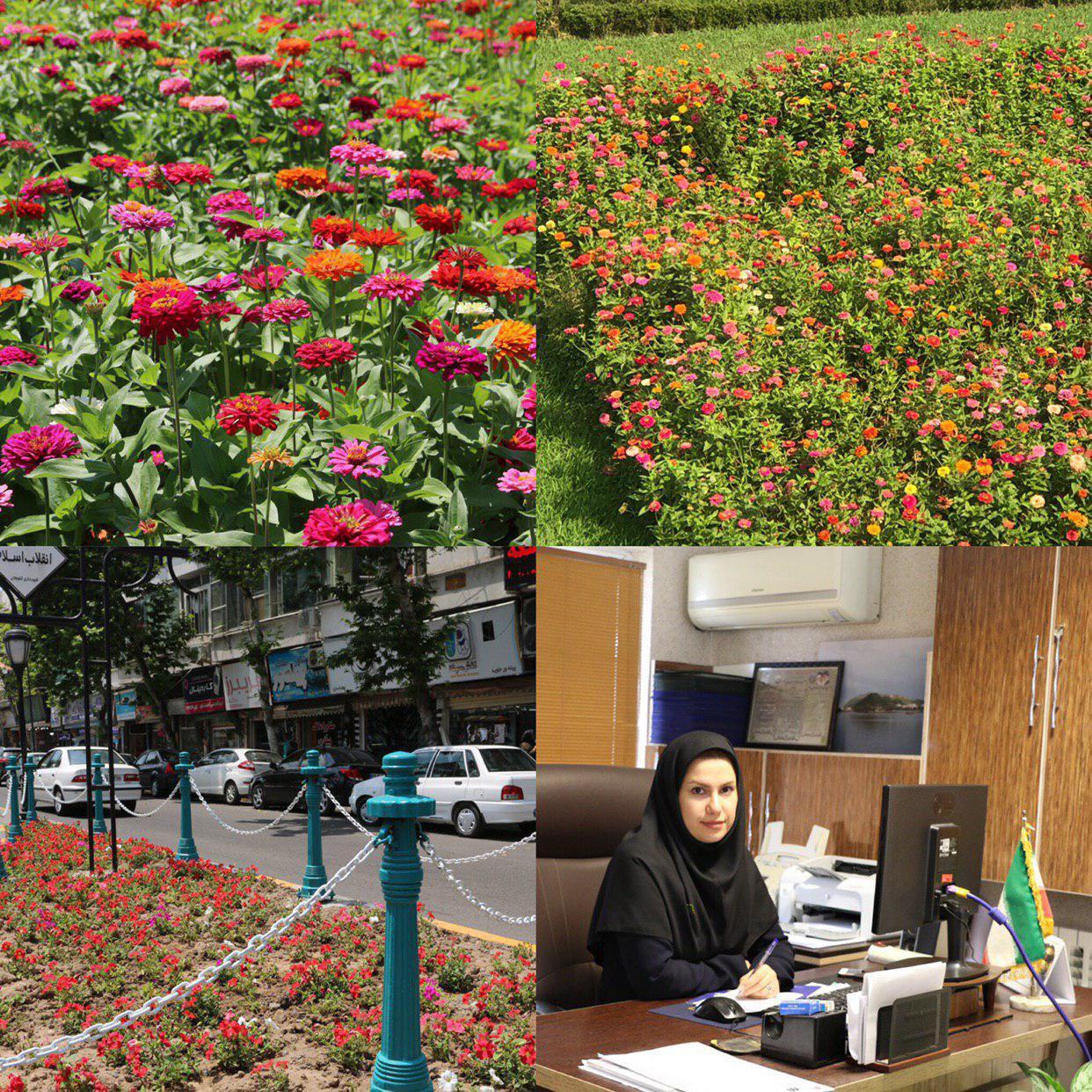 همزمان با سال رونق تولید شهرداری لاهیجان از تولیدات گلخانه خود درسطح شهر استفاده می کند.