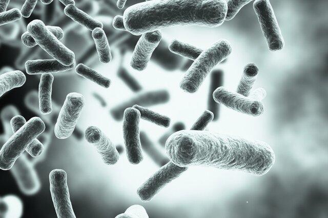 ریزحاملهایی که باکتریها را فریب میدهند!