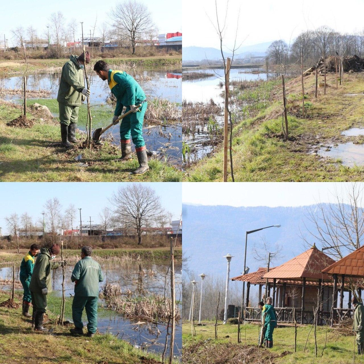 شهرداری لاهیجان همزمان با روز درخت کاری و هفته منابع طبیعی اقدام به کاشت چهار هزار درخت در گونه های مختلف در سطح شهر لاهیجان کرد.