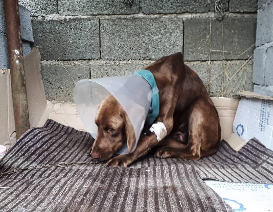 سرنوشت سگی زیبا به نام قهوه در یکی از روستاهای آستانه اشرفیه ….