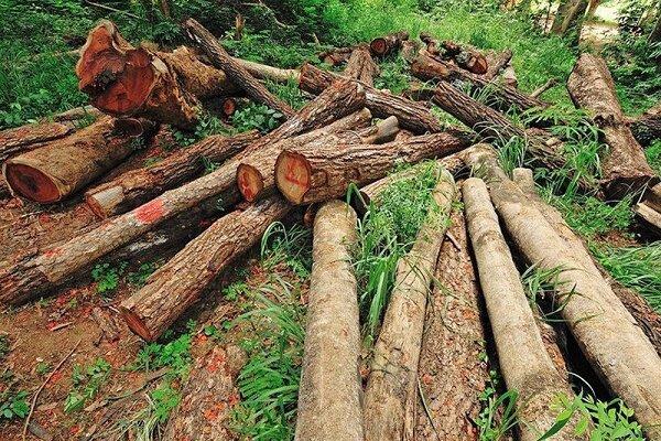 قاچاق چوب از تنفس تا کرونا!